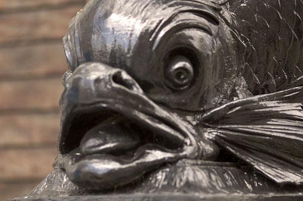 Phoenixfeather photos fish face for Plenty of fish phoenix